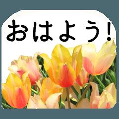 暮らしに花を♪チューリップ Part2