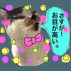[LINEスタンプ] おだて上手猫舎 (1)