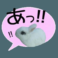 「あいうえお!」うさぎの癒しスタンプ
