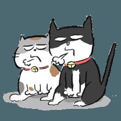 大盛家の猫たち
