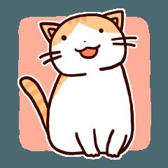 ややぽちゃ茶トラ猫