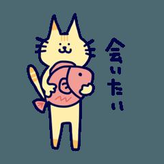 猫のチェルシーさん
