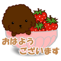 [LINEスタンプ] 4色のトイプードル 敬語バージョン2 (1)