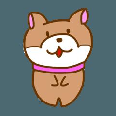 柴犬 ルナ