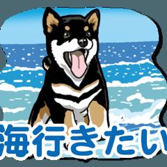 [LINEスタンプ] わんこ日和 黒柴11 夏 (1)