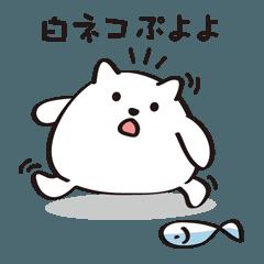 白ネコぷよよ【日常編】