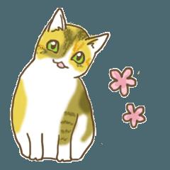 STRUMMERの猫