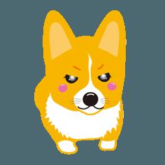 犬 コーギー