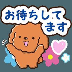 やさしいトイプードル【待ち合わせ編】