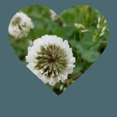 [綺麗な花と空のハート]