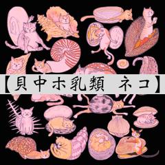 貝中ホ乳類ネコ