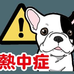 [LINEスタンプ] わんこ日和 フレンチブルドッグの仔犬3 夏