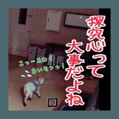 「ありがとう」と言える幸せ〜特別編〜