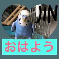セキセイインコのJIN&RENの日常会話( ◜ᴗ◝)