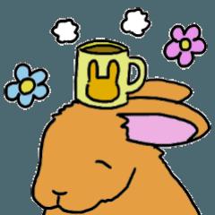 ウサギのマロン