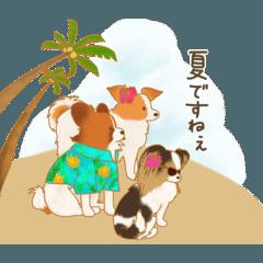 いぬ達(夏)