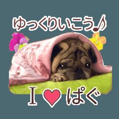I love ぱぐCacaoスタンプ