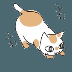 適当なあいづちをうつ猫たち