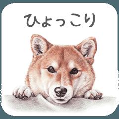 Momojiの犬画スタンプ
