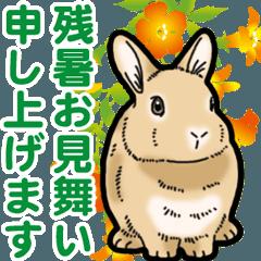 [LINEスタンプ] もふもふウサギ 4 #夏
