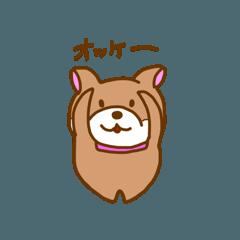 柴犬ルナ2