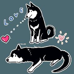 Every Day Dog 黒柴 日本語