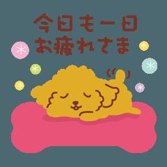 もふもふプードルのモフプー【Vol.7】