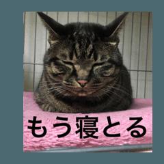 博多弁をしゃべる猫たちのシュールな毎日
