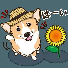 気軽にスタンプ コーギー 夏季編