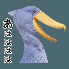 [LINEスタンプ] ハシビロコウの日常会話 (1)