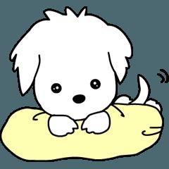 小犬の『オブ』
