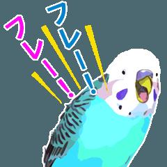 インコのPちゃんと鳥仲間 応援編