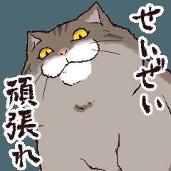 ふてぶてしく応援する猫