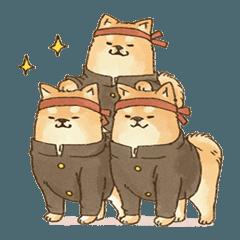 可愛い柴犬の応援スタンプ