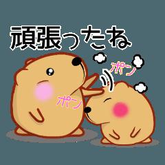 きゃぴばら【応援】