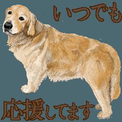 [LINEスタンプ] 優しい犬!4 応援してます