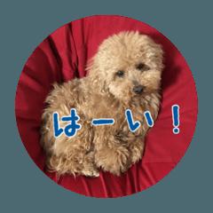 トイプードル モコちゃんのスタンプ
